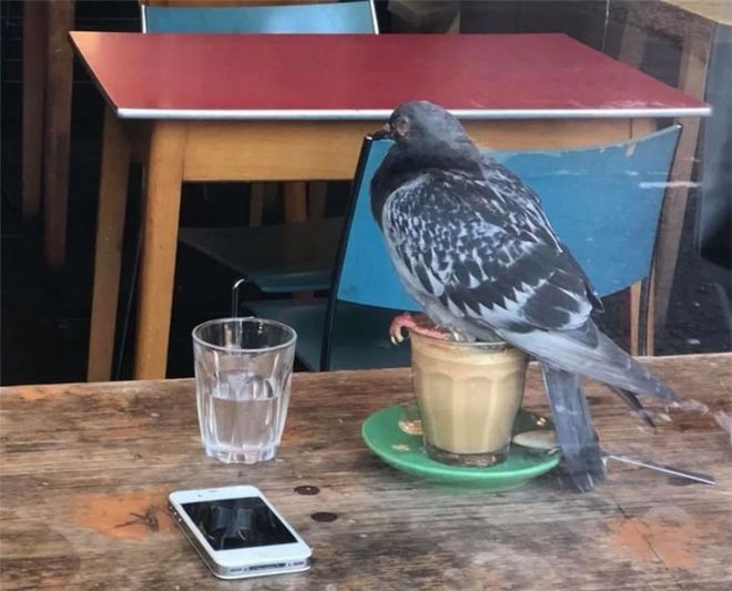 20 Badass Birds That Will Make Your Laugh