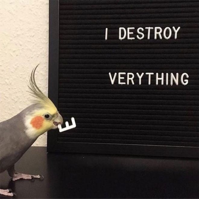 20 Badass Birds That Will Make Your Laugh