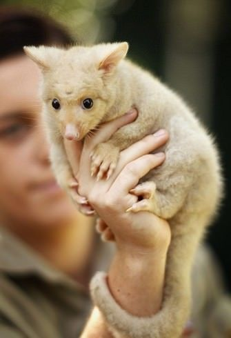18 Adorable Animals From Australia