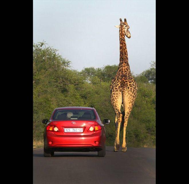 Lets Take An African Wildlife Safari