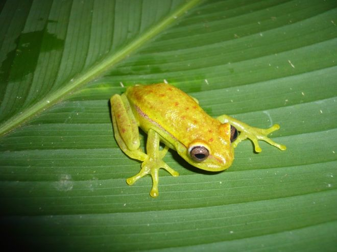 10 Surprising Animal Species Discovered In Past 10 Years