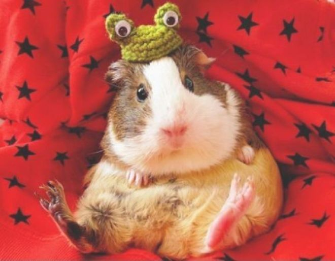 These 20 Animals Look Really Cute In Hats