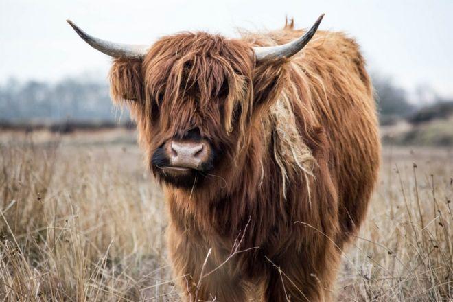 17 Dashing Animals That Have Wonderful Hair