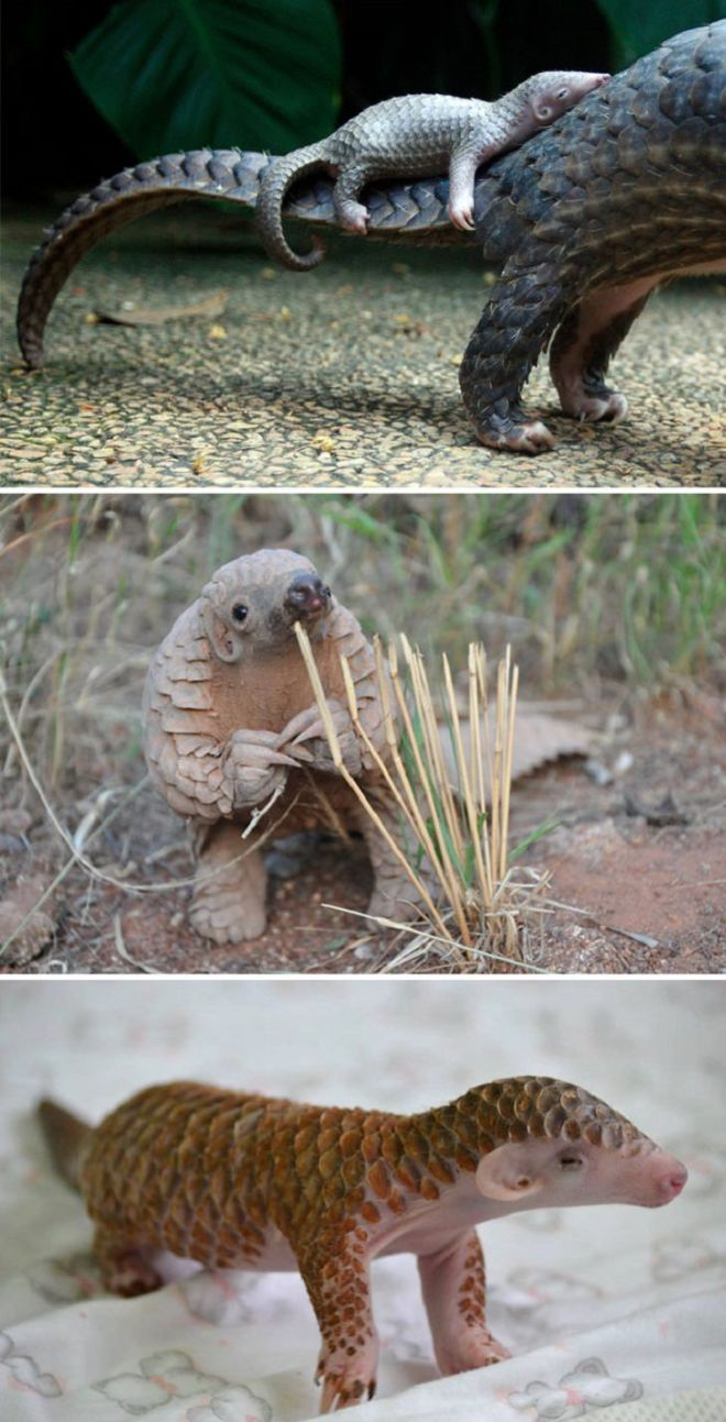 These 17 Rare Baby Animals Will Leave You Awestruck