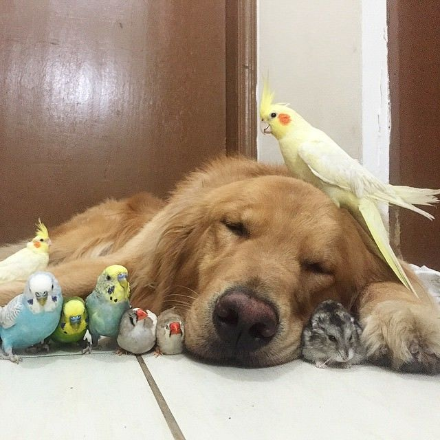 A Brazilian Man And His Cutest Friends Will Make Your Day