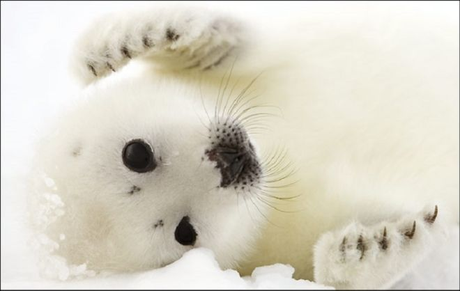 Meet These 11 Cutest Polar Animals