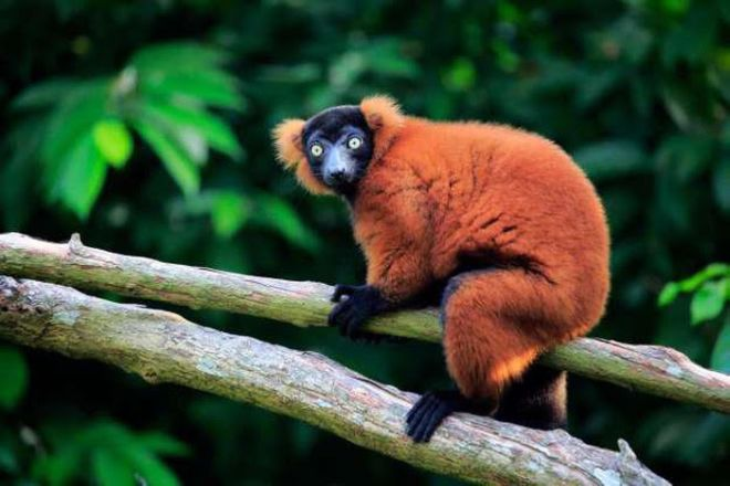 Madagascar Is The 'Paradise' Of Exotic Animals