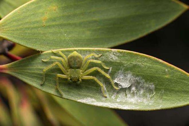 Madagascar Is The 'Paradise' Of Exotic Animals