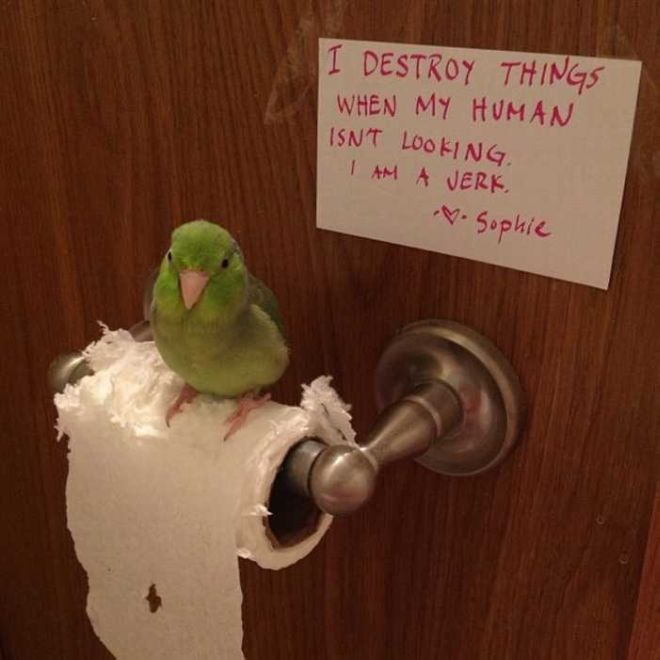 20 Funny Bird Shaming Photos To Make You Laugh