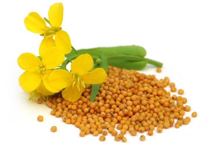 10 Most Amazing Benefits Of Mustard