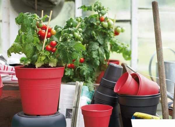 Learn How To Grow Your Own Vegetables And Fruits At Home